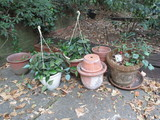 Lot - Misc. Planters & Live Plants