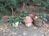 Lot - Misc. Planters & Live Plants