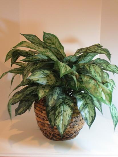 Large Wicker Basket w/Faux Silk Plant