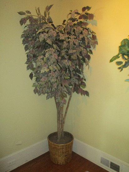 """Faux Ficus Tree in Basket Planter - Approx.84"""" Tall- Looks so Real!!"""