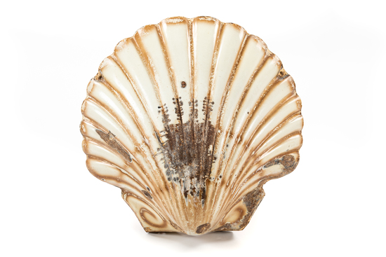 Early Shell Clam Sign