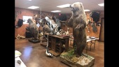Exotic and Native Taxidermy Auction