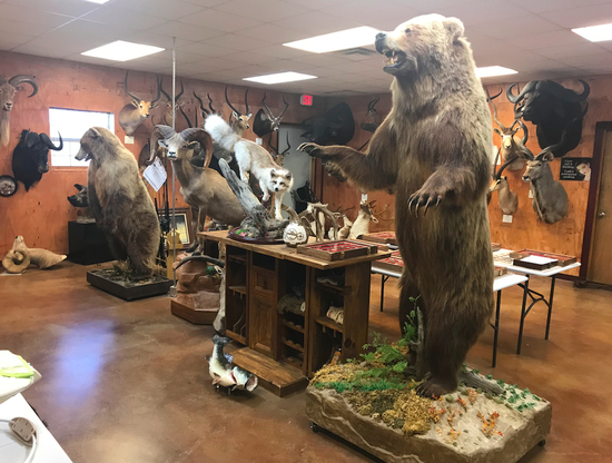 Early Summer High End Taxidermy Sale