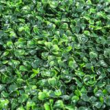 Artificial Boxwood Panels Topiary Hedge Plant