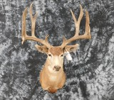 MULE DEER 12PT HEAVY RACK