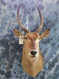 WATERBUCK MT