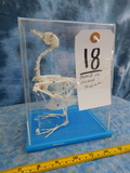 BABY CHICKEN SKELETON