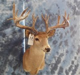 22 PT WHITETAIL -LOW FENCE DEER
