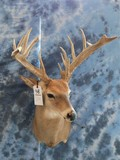 17 PT WHITETAIL -LOW FENCE DEER