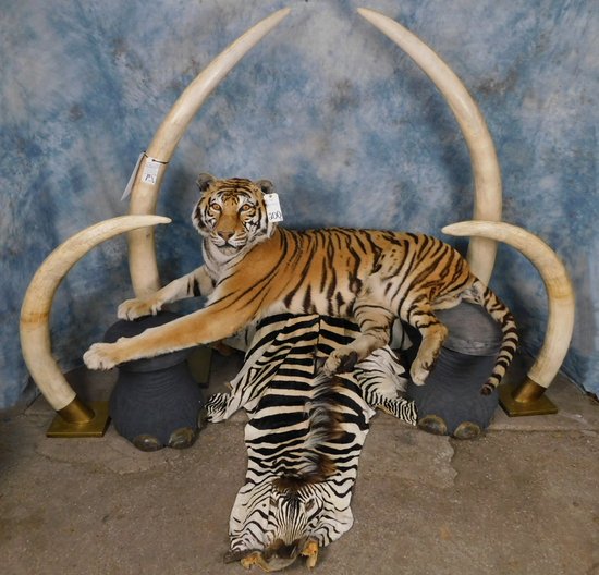 Largest Winter Taxidermy and Western Decor Auction