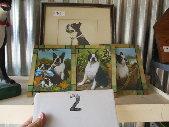 Boston Terrier lot