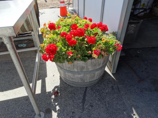 17 x 24 Half Barrel Wood Flower Pots