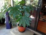 Large Living Plant