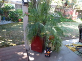 Large Living Palm and decorations