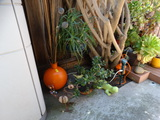 6 pc. Decorative Plants