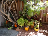All Outdoor Plants grouped