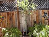 Outdoor Living Tree