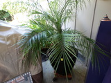 Outdoor Living Palm