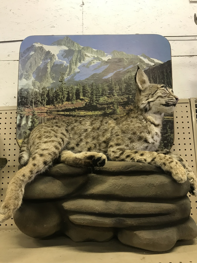 ANIMAL MOUNTS & TAXIDERMY ITEMS ONLINE AUCTION
