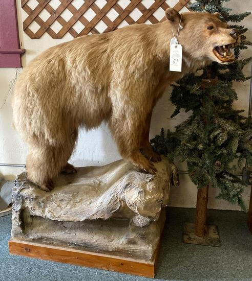 BROWN BEAR TAXIDERMY MOUNT