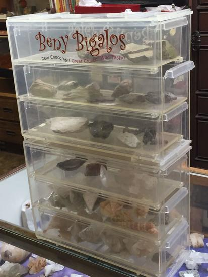 Display with Fossils, Petrified Wood, Crystals, Shells, etc
