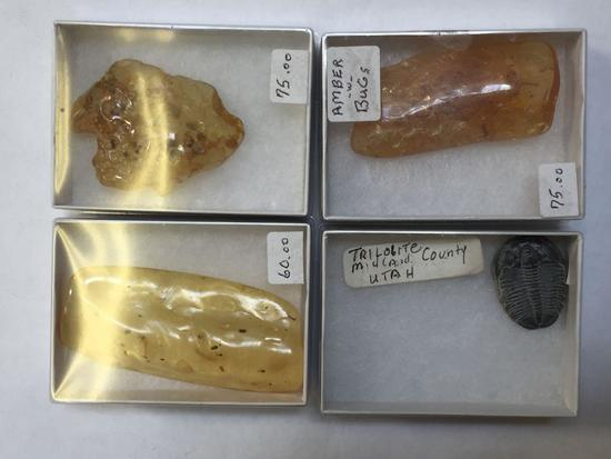 Fossils, Amber with Trapped Insects