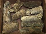 Petrified Fossilized Wood
