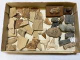 Lot of Fossils, Sharks Teeth, Wyo. Fish, Petrified Wood, etc