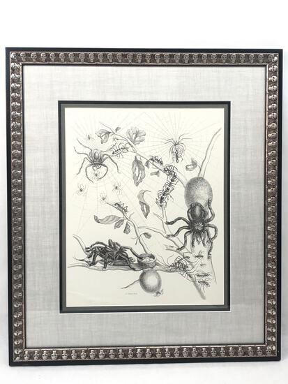 Arachnid Sketches, Framed Sketch