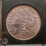 1881 Morgan Silver Dollar bu++ toned beauty in plastic slab 90% silver