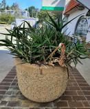 Huge Planter Succulents Included