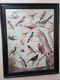 Framed Audubon Chart No 1