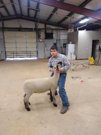 SHANE ADAMS - MUSTANG FFA - Sheep