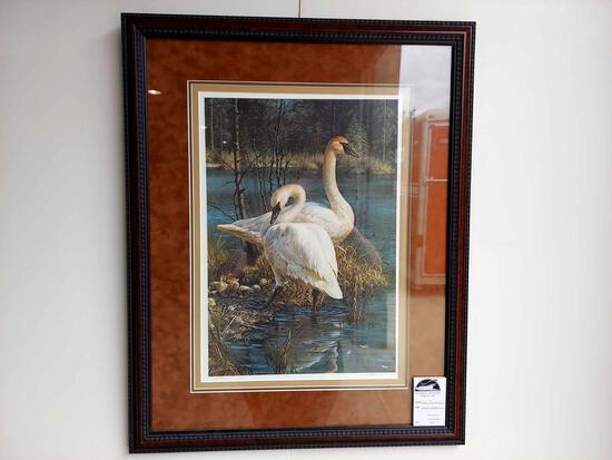 Framed White Elegance-Trumpeter Swans by Carl Brenders