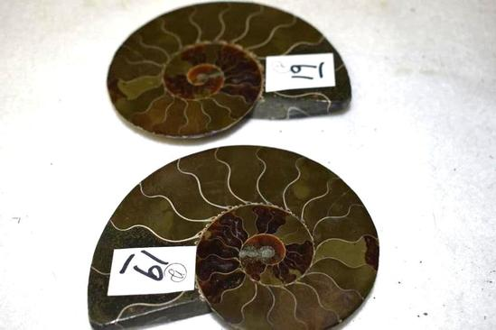 Sliced Ammonite Fossil 2 Matched Halves Polished 3.5 in x 3 in
