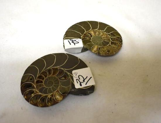 Matched Halves Ammonite Fossil, 3.5 x 3 in.