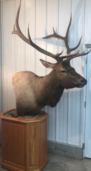 6x6 Elk mount