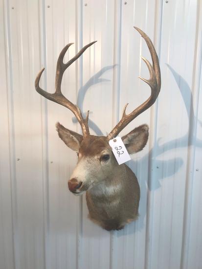 5x5 Mule Deer