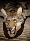 Long Haired Coyote Rug