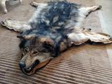 Huge Timberwolf rug