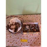 Rocks & Shells