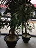 Silk Potted Plants Set of two