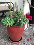 Ceramic Planter 12