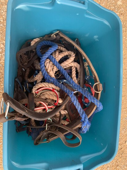 Tub of Horse Halters