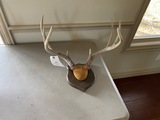 Deer Antler Mounts