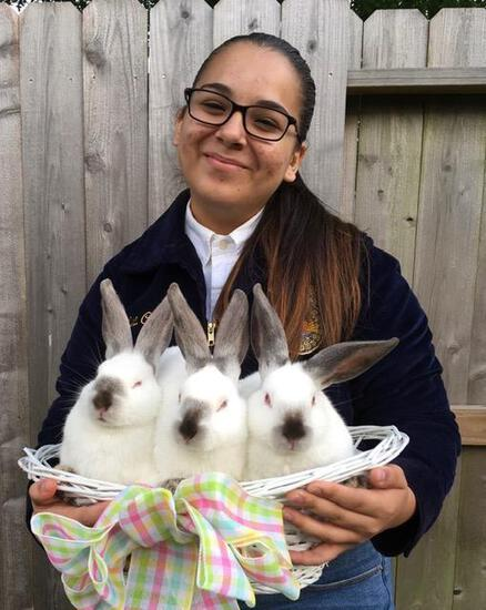 Pen of 3 Rabbits - Marisa Cedano - Wunsche FFA