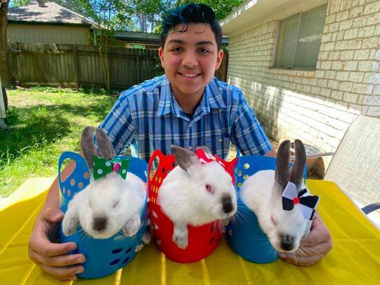 Pen of 3 Rabbits - Aiden Quintanilla - Spring FFA