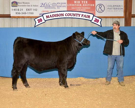 Grand Champion - Halter Heifers - Jillian Hardy - Beef Club