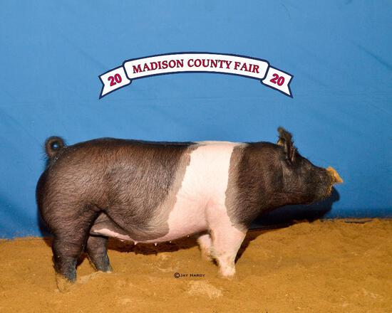 Grand Champion - Swine - Coy Measell - North Zulch 4-H