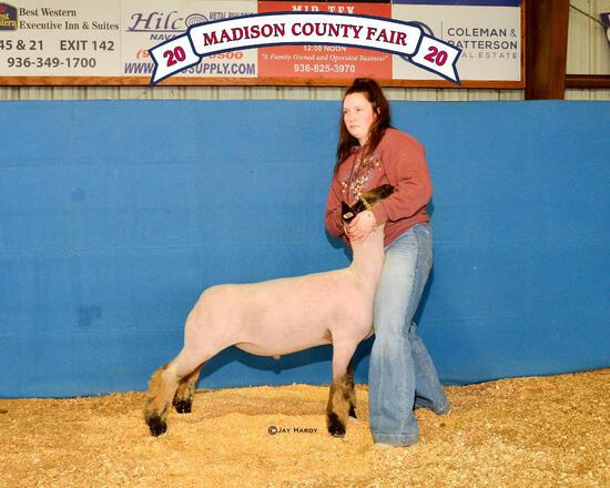 Grand Champion - Sheep - Emma Hurst - Madisonville FFA
